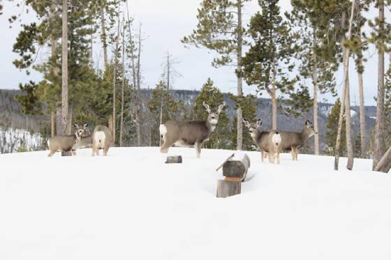 Deer.jpg.w560h373